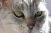 -my-cat.jpg
