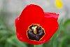 -red-flower.jpg