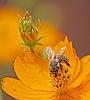 -small-bee.jpg