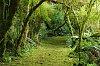 -gunns-bush-moss-carpet-sm.jpg