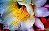 -cactus-blossom.jpg