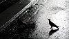 -birds2.jpg