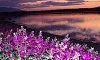 -purplescape-c.jpg