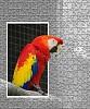 -papagei.jpg