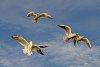 -seagulls.jpg