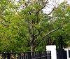 -tree-shot-vaux-hall-park-600.jpg