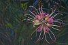 -unfurling-flower-1.jpg