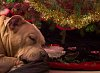 -brandy-waiting-santa-2013.jpg