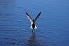 -duck-run.jpg