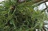 -lichen-creature-reg-alt-crp-2.jpg