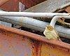 -bird-wagon-cls.jpg