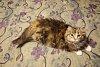 -new-kitten.jpg