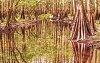 -cypres-relextion-9610-800x507-.jpg
