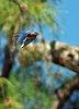 -fay-jim-birds-042-c.jpg