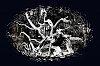 -fallen-tree-2-.jpg