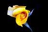-flower-3-.jpg