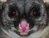 -thz-possum.jpg