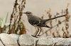 -mockingbird-brdbth-side-dev.jpg