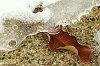 -leaf-ice3.jpg