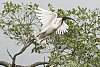 -ibis-1.jpg