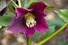-purple-flower.jpg