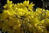 -anna-flower-small-10_26_08.jpg