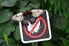 -butterflies-free-4.jpg