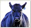 -no-bull.png