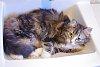 -kitten-sink1.jpg