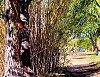 -scary-tree-2-.jpg