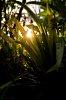 -sun-leaves.jpg