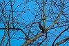-treebird.jpg