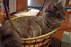 -loo-what-easter-bunny-l.jpg