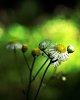 -flower-weed.jpg