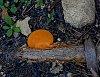 -fungus.jpg