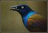 -big-birds.jpg