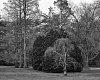 -trees-b-w.jpg