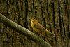 -bird.jpg