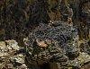 -osprey-iii-1024-301788.jpg