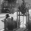 -ivy-street.jpg
