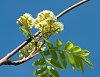 -flower-ii-302165.jpg