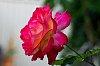 -pink-light.jpg