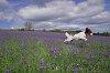 -bluebells-2-.jpg