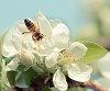 -bees-1-5-.jpg