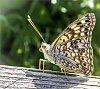 -butterfly-5539.jpg