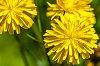 -yellow-flower.jpg