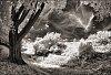 -danebury_tree_14_1.jpg