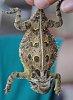 -horned-toad.jpg