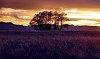 -224203d1401341684-landscape-sunset-prairie-3-2-.jpg