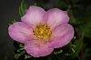 -dainty-wee-pink-flower.jpg